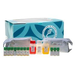 Human thyroglobulin (hTG) immunoradiometric assay kit