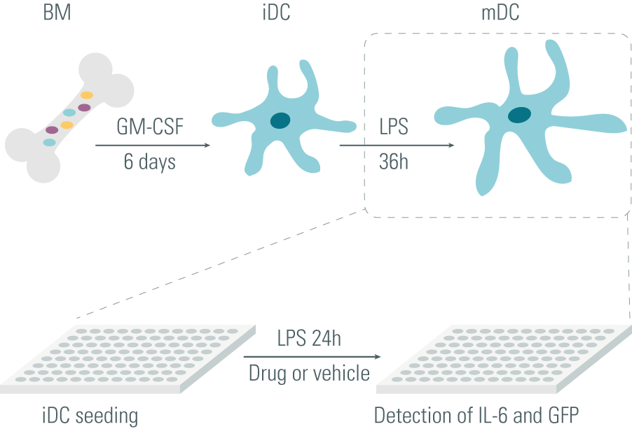 LPS-stimulated mature dendritic cells (mDC) to screen drug candidates for MS